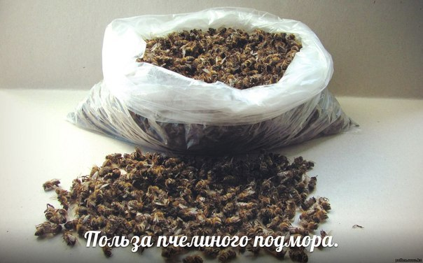 Настойка из мертвых пчел: на спирту, применение